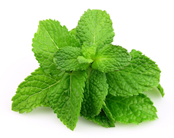 Mint leaves on white background. Menthol comes from mint and provides pain relief