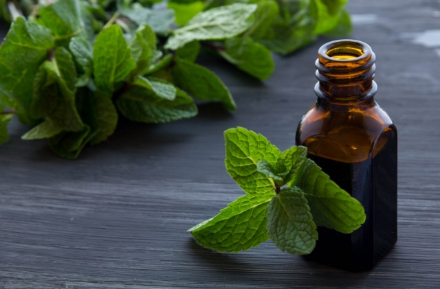 Why Is Peppermint Oil So Popular?