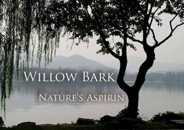 willow-bark-aspirin-pain