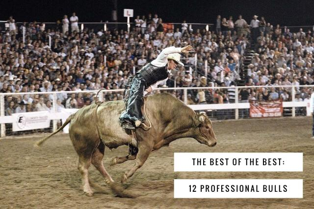 12-Best-Professional-Bulls