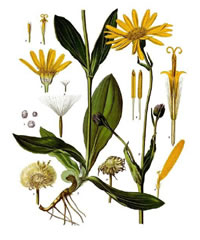 Arnica to fight inflammation and pain.