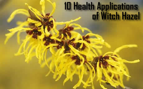 health-applications-of-witch-hazel