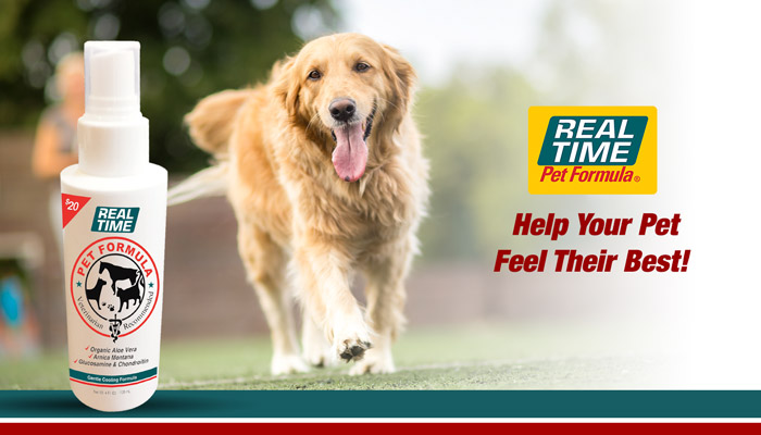 Help your pet feel their best