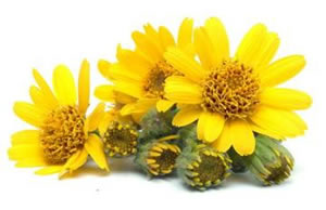 The many benefits of Arnica